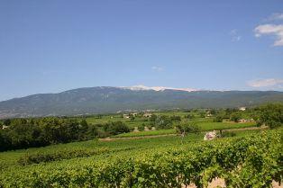 Le Mont Ventoux et ses vignes